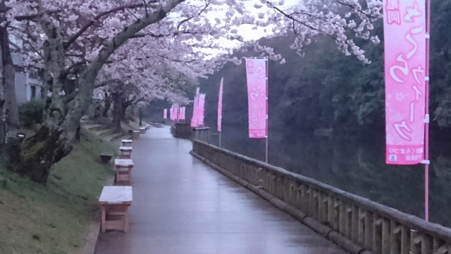 南郷公園(京都府亀岡市)の桜
