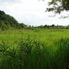 深泥池(みぞろがいけ)、京都市北区