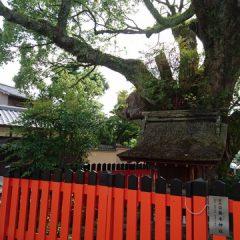 藤木(ふじのき)神社